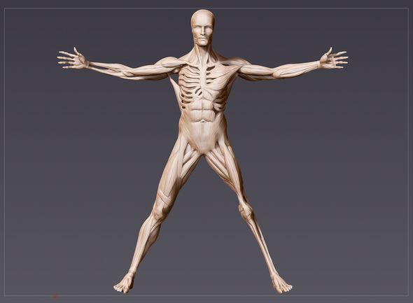 IMAGE: Westworld Vitruvian Man Render